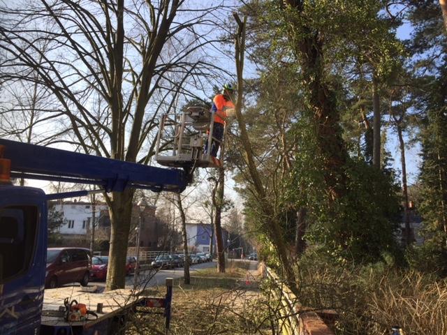 Baumpflege von A bis Z